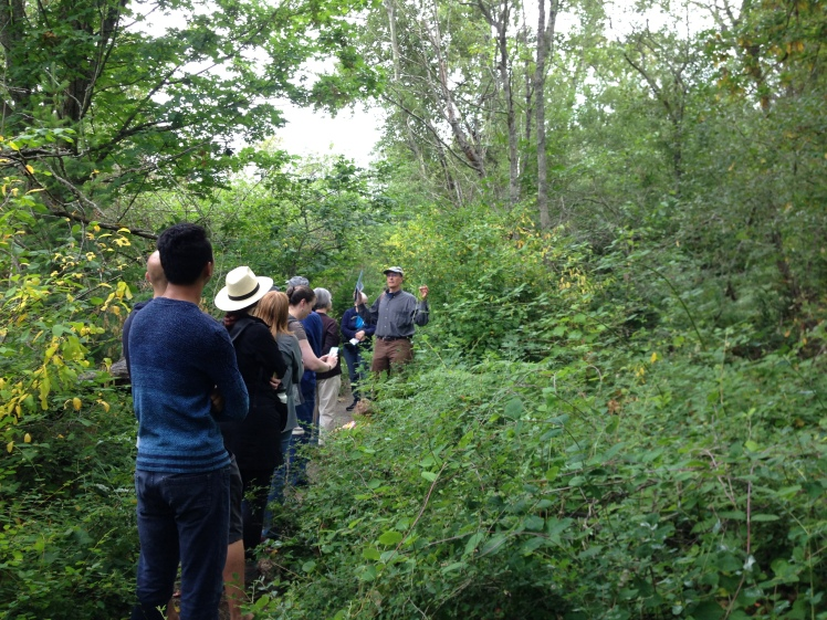 Native plant hike with Steve